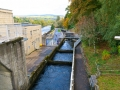 The Fish Ladders, Pitlochry Dam